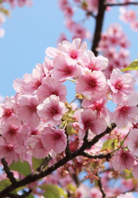 福岡,日本酒,吟醸香,春