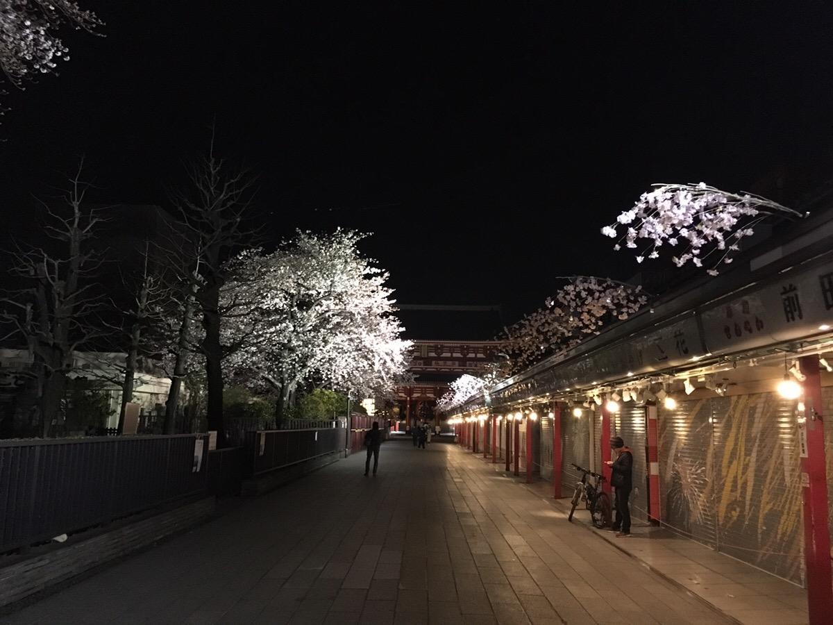 浅草,夜桜,桜吹雪,ソメイヨシノ,喜多屋
