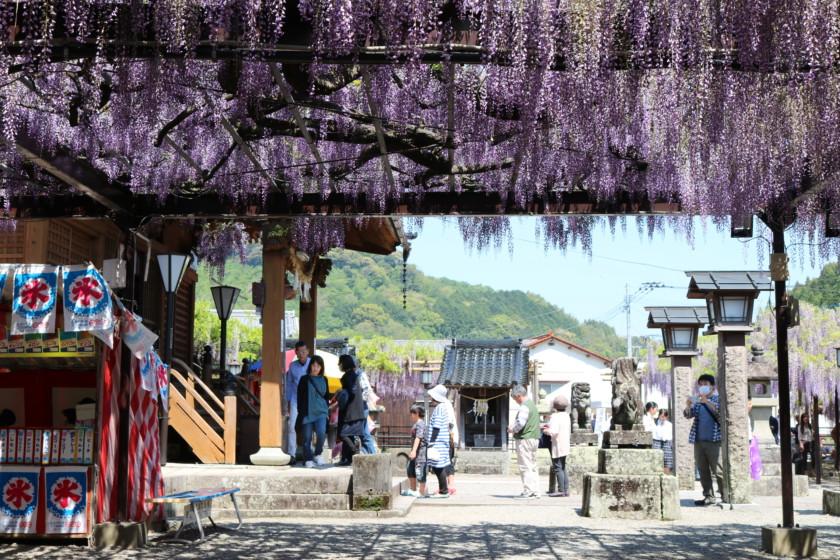 福岡,日本酒,吟醸香,黒木の大藤