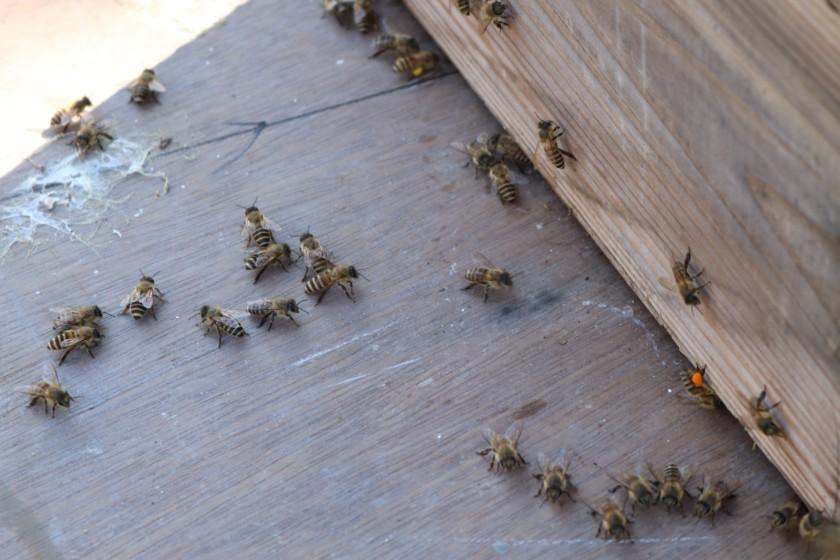 福岡,吟醸香,日本酒,糸島,日本蜜蜂,蜂蜜
